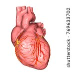 healthy human heart isolated on ...   Shutterstock . vector #769633702