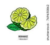 bergamot vector drawing.... | Shutterstock .eps vector #769650862