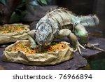 Iguana Feed Sweetly Fresh...