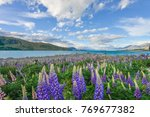 lupine flower at lake tekapo | Shutterstock . vector #769677382
