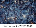 oak leaves covered with drizzle   Shutterstock . vector #769697248