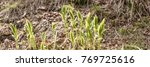 young plants start to grow on... | Shutterstock . vector #769725616