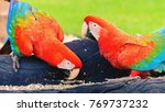 Small photo of Two red macaws feeding of seeds. Bird from Brazil, also known as Arara Vermelha.