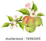 Apple Tree Branch With Fresh...