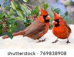 Northern Cardinals On Snowy Da...