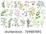 watercolor botanical collection.... | Shutterstock . vector #769887892