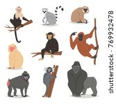 Monkey Vector Set Cute Animal...
