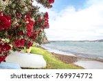 Flowering Red Pohutukawa Is...