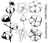 hand drawn flowers. cotton... | Shutterstock .eps vector #769974862
