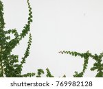 green creeper plant on a white... | Shutterstock . vector #769982128