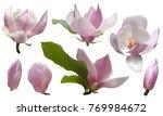 magnolia isolated spring flower ... | Shutterstock .eps vector #769984672