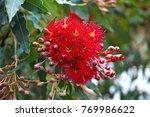 vibrant decorous red flowering... | Shutterstock . vector #769986622