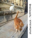 street cat on malta and gozo... | Shutterstock . vector #769993948