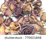 dried pink rose on white... | Shutterstock . vector #770021848