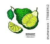 bergamot vector drawing.... | Shutterstock .eps vector #770083912