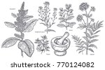 set of isolated medical plants  ... | Shutterstock .eps vector #770124082