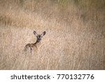 female deer doe behind tall... | Shutterstock . vector #770132776