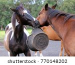 two horses  one black and white ... | Shutterstock . vector #770148202