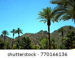 tree line at stagecoach   Shutterstock . vector #770166136