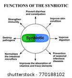 functions of the synbiotic....   Shutterstock .eps vector #770188102