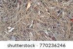 abstract macro of pine needles