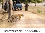 a male tiger walking its... | Shutterstock . vector #770293822