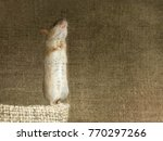 closeup mouse stands on its...   Shutterstock . vector #770297266
