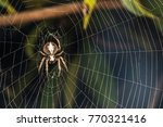 spider with close up view. | Shutterstock . vector #770321416