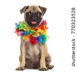 Stock photo pug wearing a hawaiian lei dog isolated on white 770323528