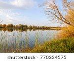 Autumn Lake Cane Trees  Green...