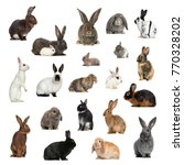 Stock photo large collection of rabbit pet and exotic in different position isolated on white background 770328202