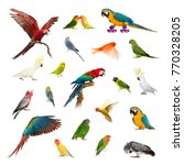 Large Collection Bird Pet Exotic - Fine Art prints
