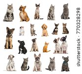 large collection of 10 dogs and ... | Shutterstock . vector #770328298