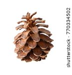 brown pine cone. pinecone... | Shutterstock . vector #770334502