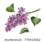 watercolor branch of lilac and... | Shutterstock . vector #770414362
