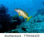 one spot snapper  similan... | Shutterstock . vector #770436325