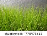 wilmington  north carolina | Shutterstock . vector #770478616