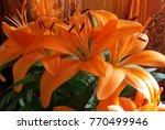 Three Orange Lilies