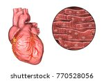 human heart and close up view... | Shutterstock . vector #770528056