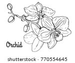 orchid flower branch. black and ...   Shutterstock .eps vector #770554645