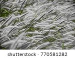 Green Leafs And White Grass...