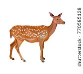 Female Fallow Deer. Vector...