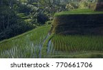 green rice terrace in the city... | Shutterstock . vector #770661706