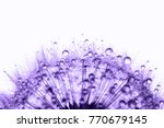 dandelion in the dew drops on... | Shutterstock . vector #770679145