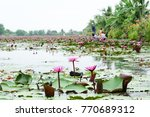View Of The Pink Lotus Pond An...