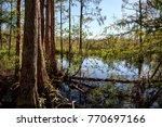 wetlands in the corkscrew swamp ... | Shutterstock . vector #770697166