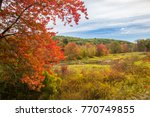 a pond in a wetland surrounded... | Shutterstock . vector #770749855