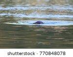 eurasian otter on the norwegian ... | Shutterstock . vector #770848078