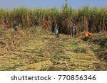 madhya pradesh india january 15 ... | Shutterstock . vector #770856346