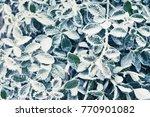 winter frozen leaf pattern | Shutterstock . vector #770901082
